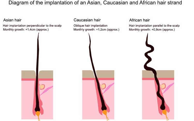 to determine the type of hair